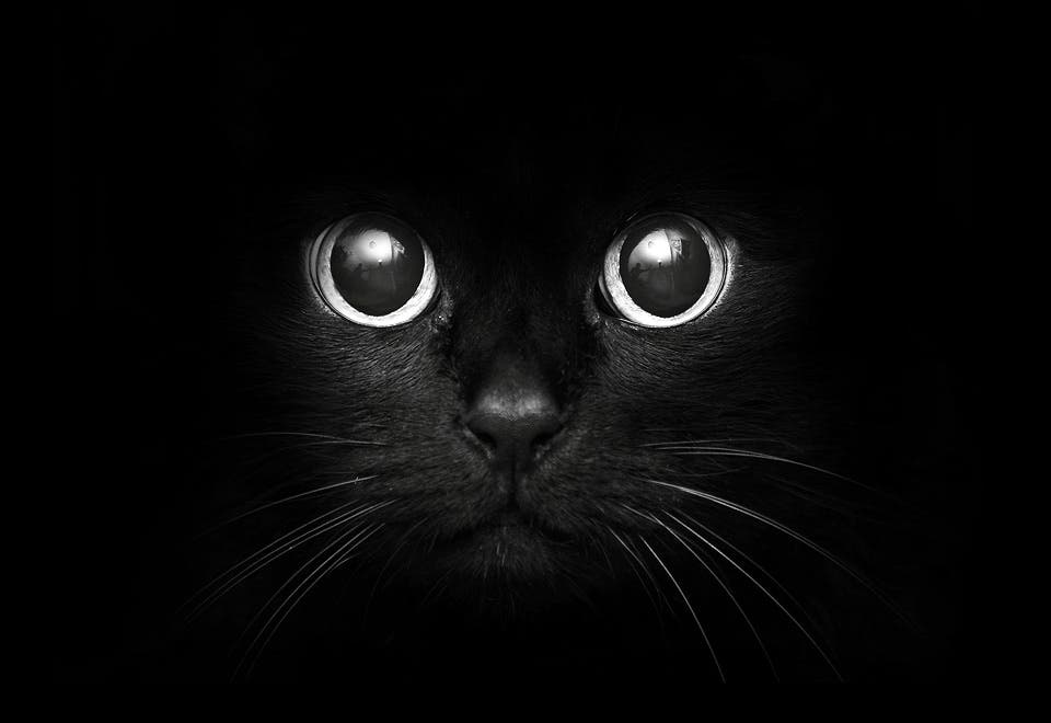 Kitten See In Dark